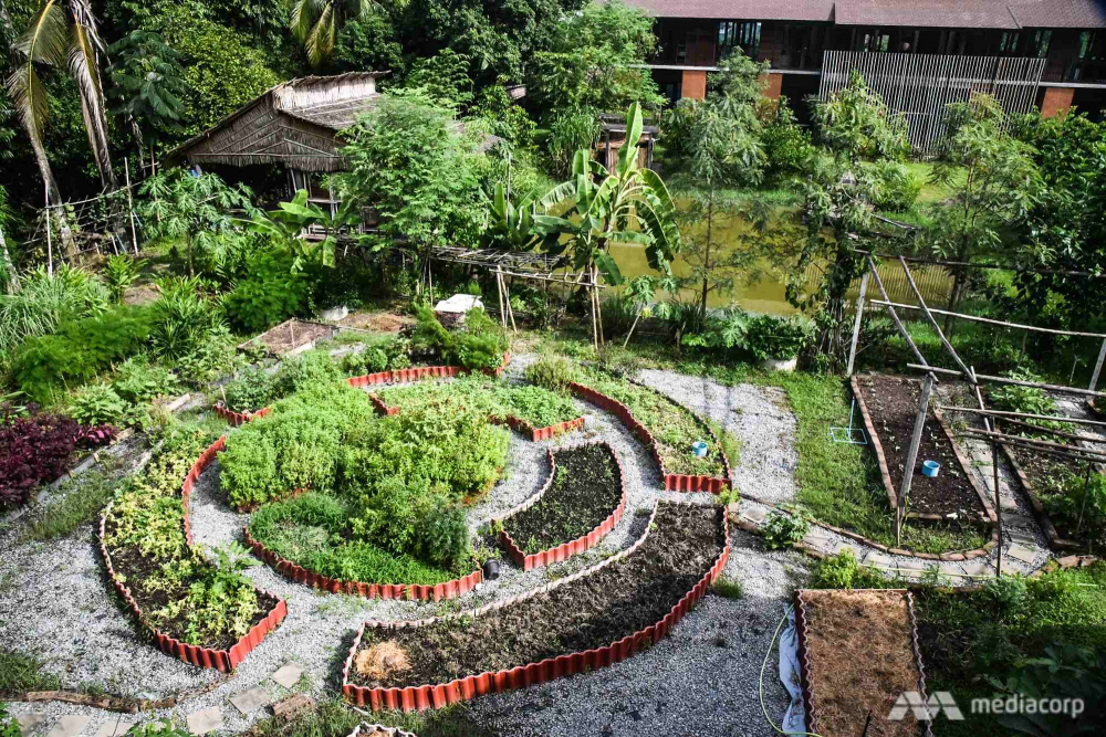 Trang trại đô thị tại trụ sở dự án Nông trại Thành phố Thái Lan - Ảnh: Jack Board