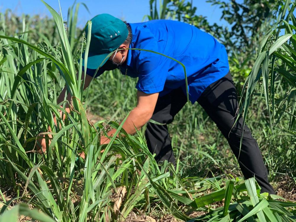 Đoàn viên thanh niên cắt cỏ giúp dân xóm 3