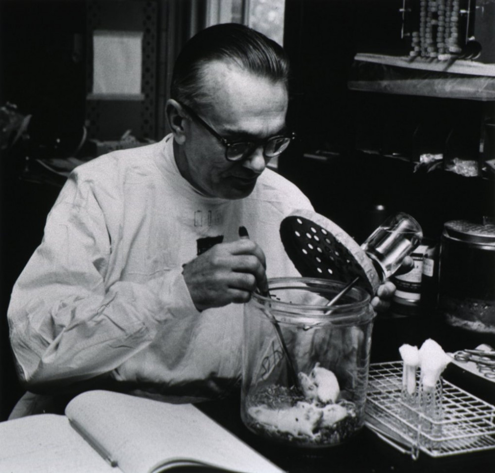 Tiến sĩ Karl Habel đang nghiên cứu trong phòng lab tại Viện nghiên cứu Quốc Gia các bệnh truyền nhiễm và dị ứng (NIAID- Hoa Kỳ) năm 1951 - Ảnh: NIH