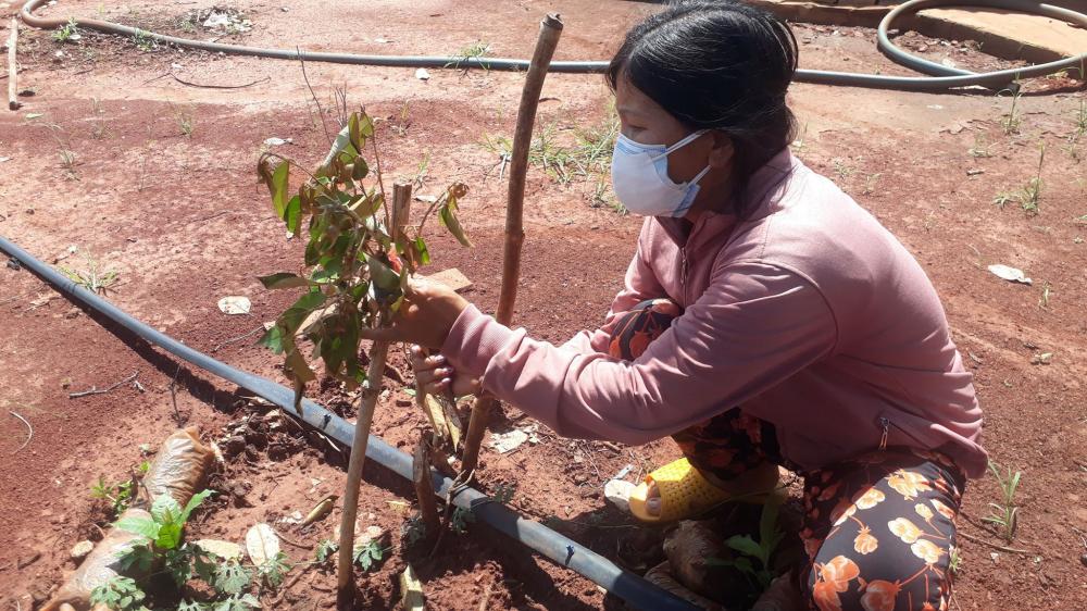 Người vợ bên cạnh những cây ăn quả bị chặt phá - Ảnh: Quang Long