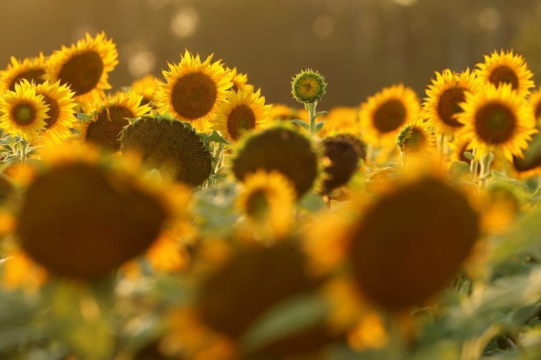 Những bông hoa khoe sắc trong nắng sớm
