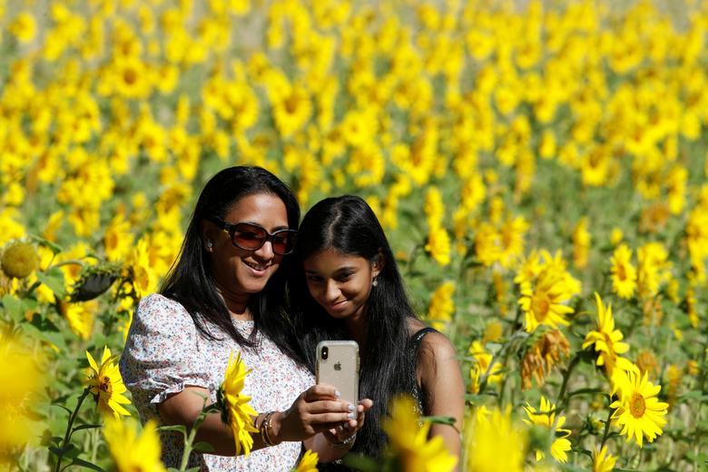 Sắc vàng óng ả của hoa tạo nên lớp phông nền hoàn hảo cho những bức ảnh.