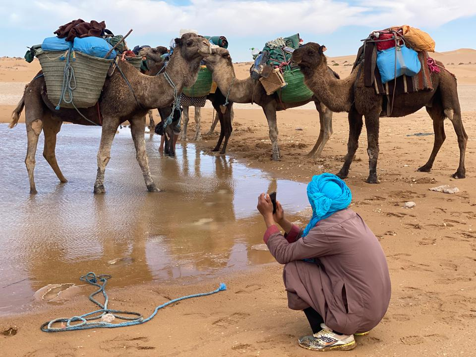 Người dẫn đường của Morrison cạnh bầy lạc đà, tại một điểm nghỉ chân trên chặng đường thám hiểm sa mạc Sahara.