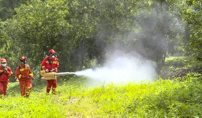 Các tỉnh miền Nam Trung Quốc tích cực phun thuốc diệt châu chấu.