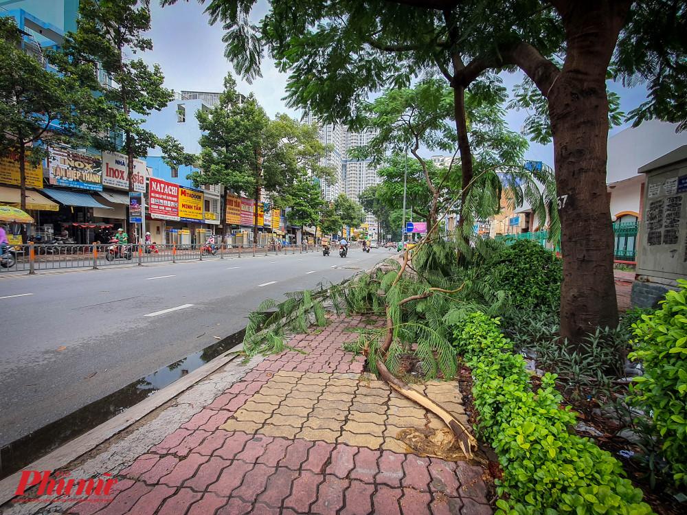 một nhánh cây lớn bất ngờ gãy rơi xuống đườngrên lối đi dành cho người đi bộ trên đường Lý Thường Kiệt (quận 10),