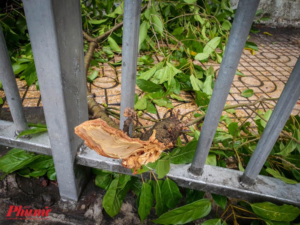 Nhánh cây bị tét do gió lớn, rơi trên vỉa hè dành cho người đi bộ