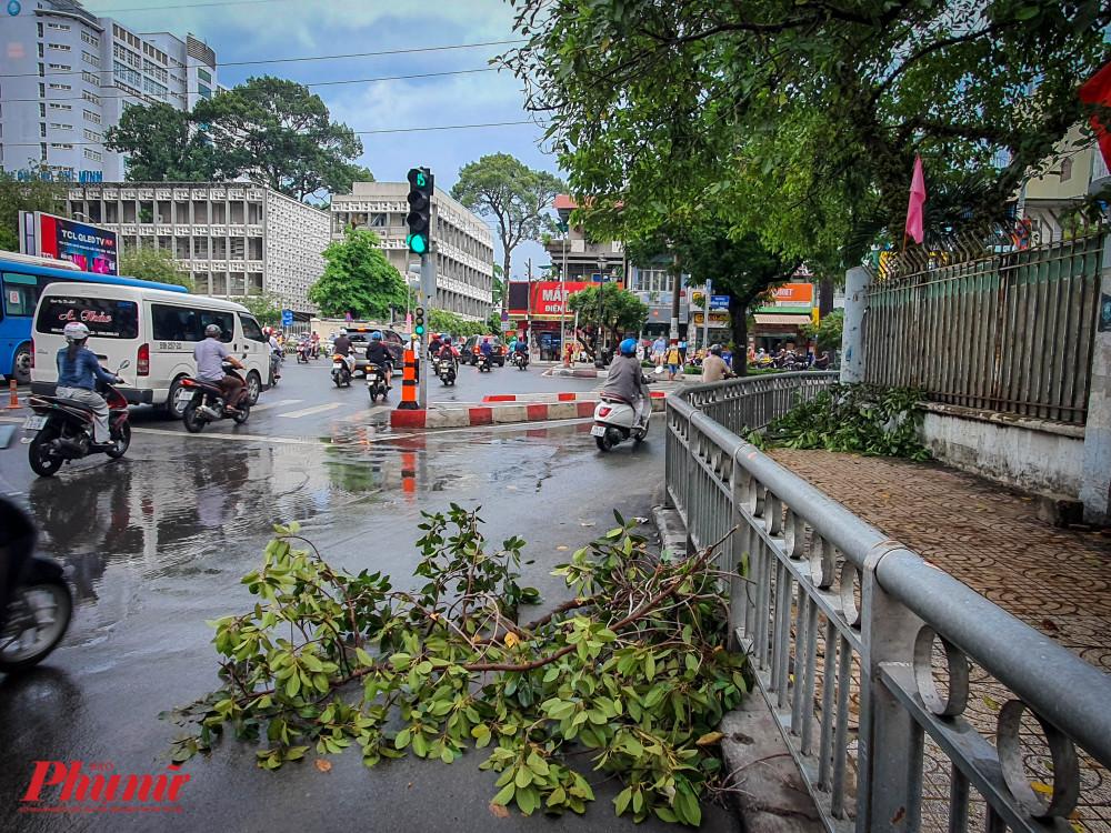 Các nhanh cây gãy rơi xuống đường tại giao lộ Lý Thường Kiệt và đường Hồng Bàng (Quận 5)