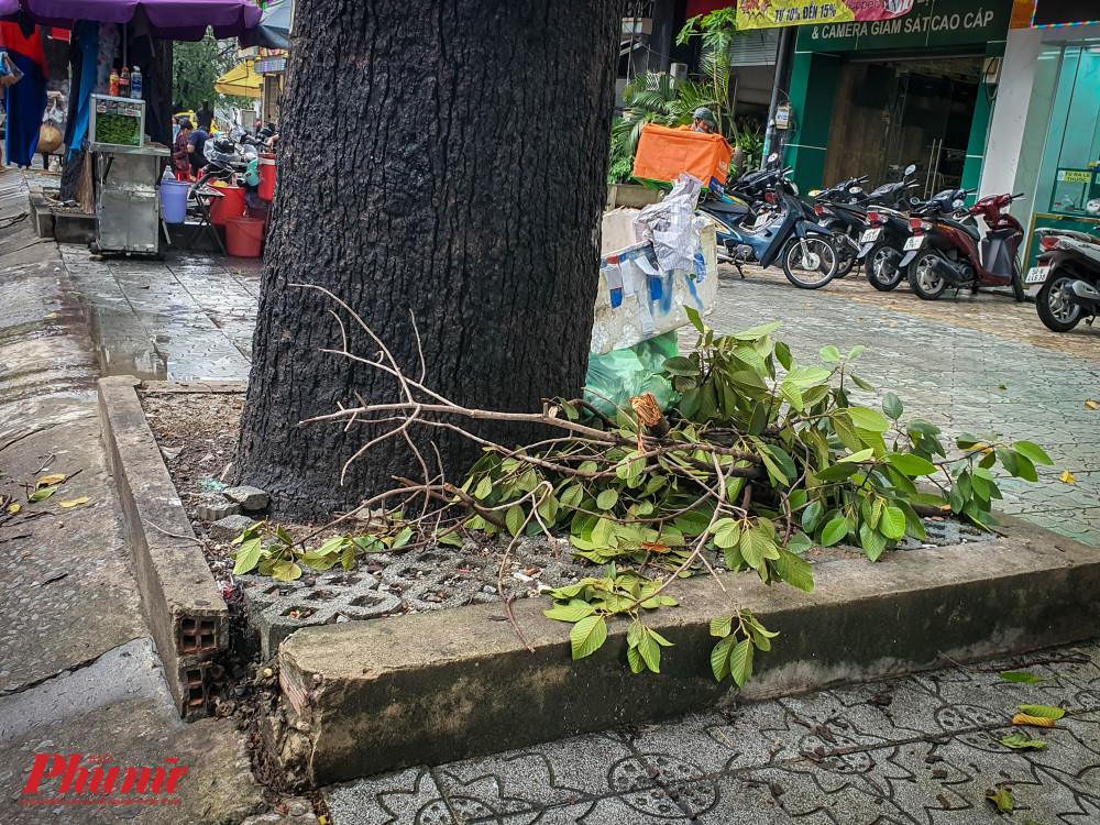 Nhánh cây sau khi gãy được người dân gom lại thành đống trên đường Lý Thường Kiệt (Quận Tân Bình)