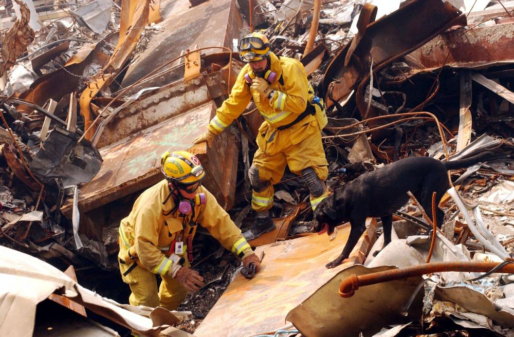 Nhân viên cứu hộ cùng chó nghiệp vụ đang cố gắng đào bới trong đống đổ nát để tìm kiếm nạn nhân - Ảnh: Andrea Buher/