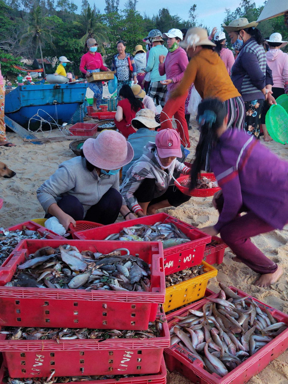 Chợ cá hừng đông ở An Hải