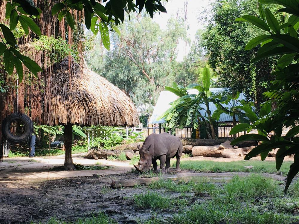 Buổi sáng bình yên của tê giác