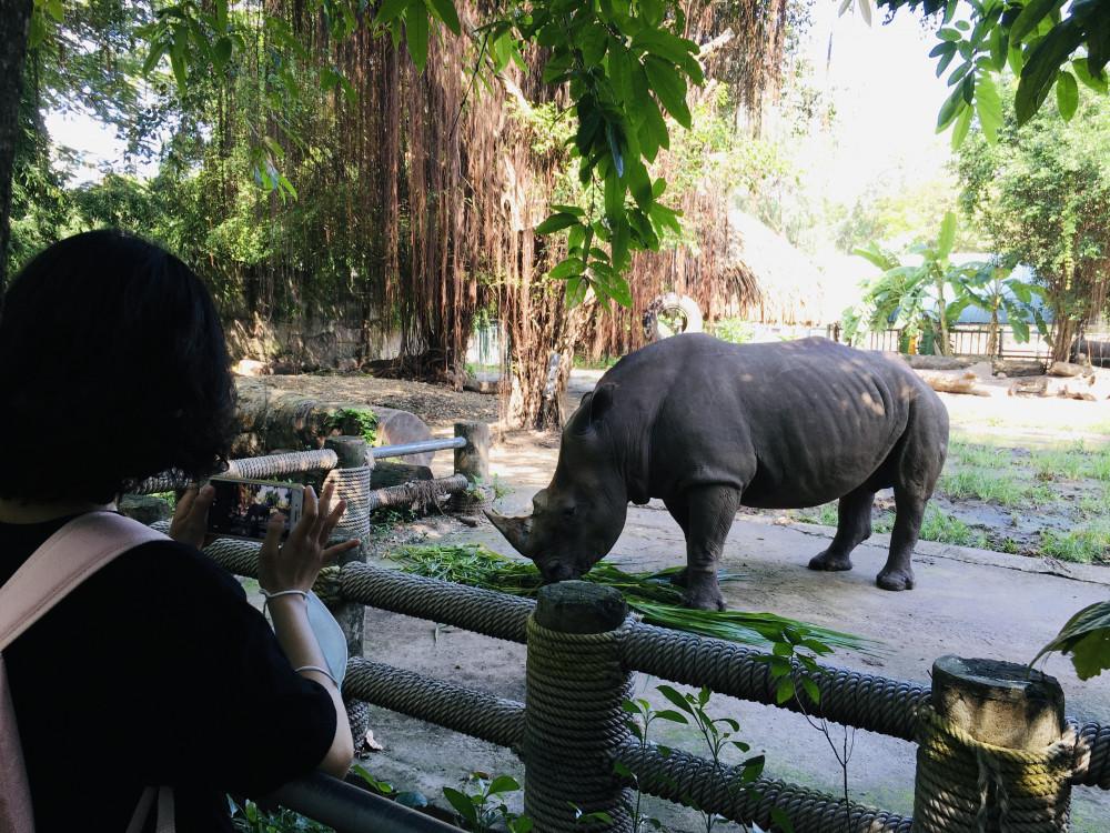 Tê giác thì lặng lẽ ăn lá
