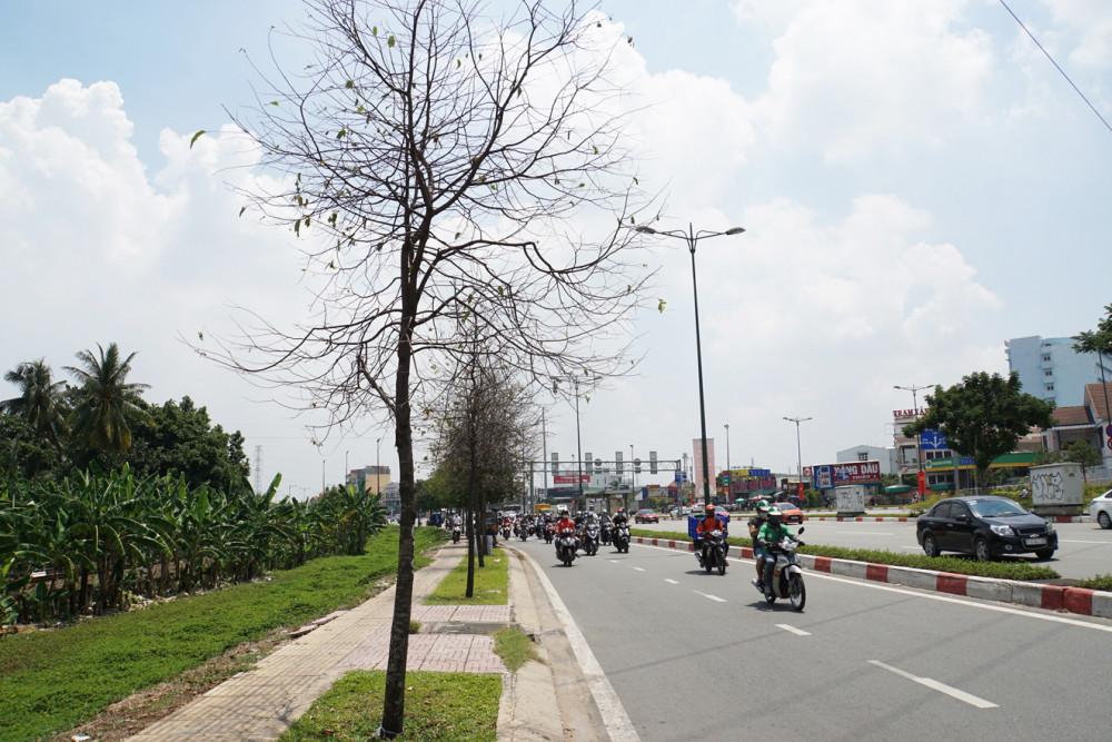 Nhiều loài côn trùng âm thầm tấn công gốc khiến cây xanh trở thành mối hiểm họa cho người đi đường