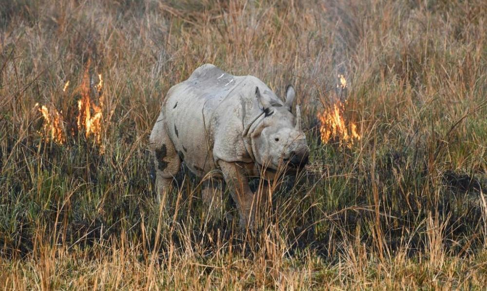 Số lượng động vật hoang dã trên thế giới giảm gần 70% trong vòng chưa đầy 50 năm qua.