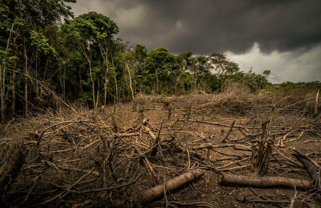 Nạn phá rừng là một trong những nguyên nhân chính dấn đến sự suy giảm đến kể số lượng động vật hoang dã.