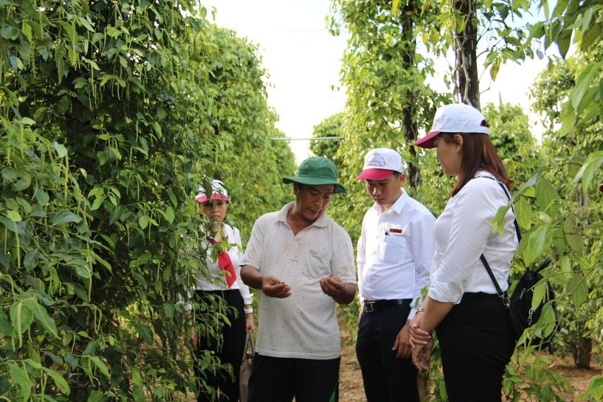 Cán bộ Agribank chi nhánh Phú Quốc thăm vườn tiêu gia đình ông Trần Quốc Dương. Ảnh: Agribank