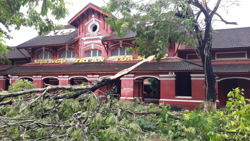 Cây trong trường học bị gãy đổ sau bão
