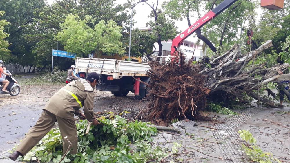 Cây cổ thụ trên đường Lê Lợi đang được nhân viên công ty cây xanh Huế thu dọn