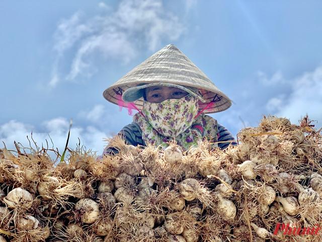 Ngoài thời gian chạy xe ôm, công việc của nhiều phụ nữ ở đảo Bé là trồng hành, tỏi và lo việc gia đinh