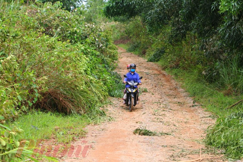 Đường vào Khe Mạ nơi nỏii tiếng trồng cao su ở xã Phong Mỹ