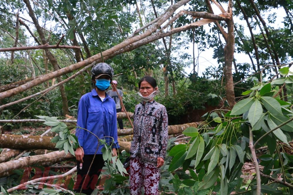 Hai mẹ con bà Vui trong khu rừng cao su ngã đổ vị bão