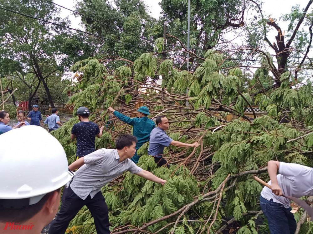 Cán bộ, nhân viên phường Phú Nhuận TP. Huế tích cực dọn dẹp cây xanh ngã đổ sau khi bão số 5 đi qua