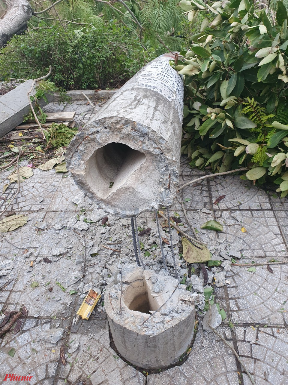 Trị điện gãy đổ trên đường Phan Châu Trinh TP. Huế. Ảnh: L.C.B