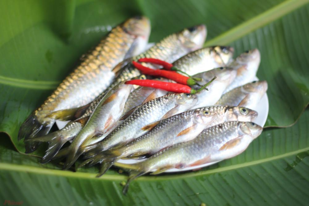Cá suối tự nhiên nên thịt săn, thơm, chắc.