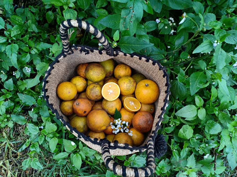 Những quả cam đầu mùa (Ảnh nhân vật cung cấp)