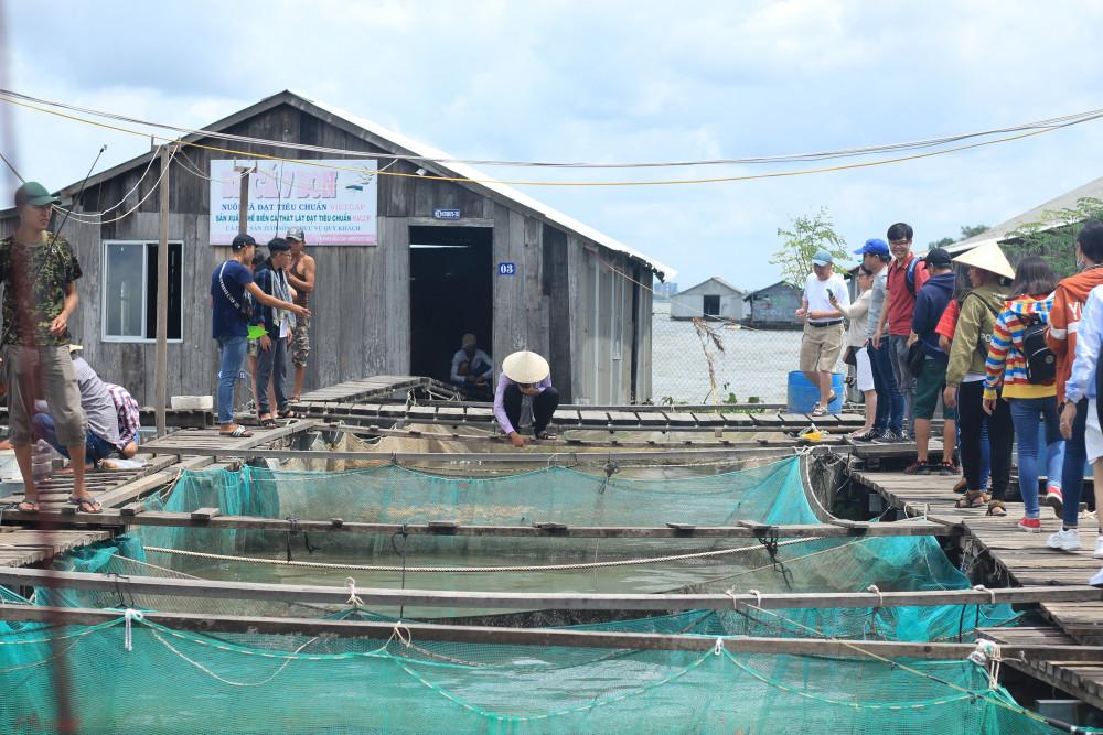 Làng bè cá Cồn Sơn có tuổi đời hơn 10 năm.
