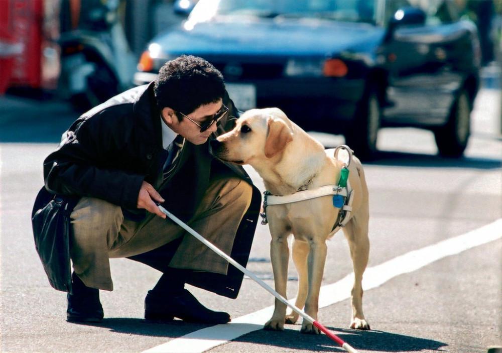 Phim Chú chó dẫn đường có lối quay và cách thuật chuyện khá lạ, mang hơi hướm phóng sự cuộc đời.