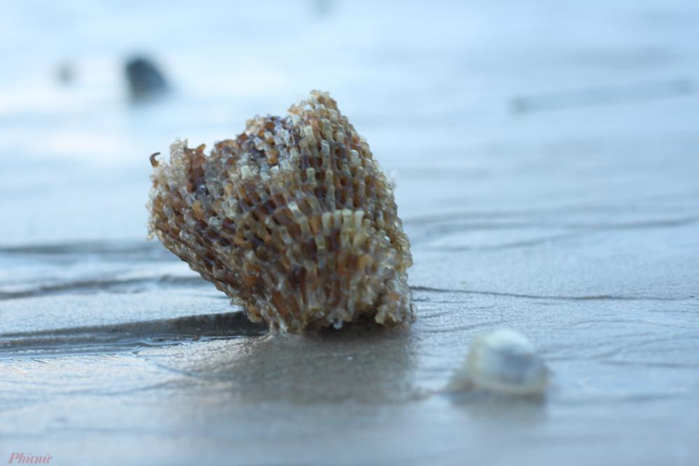 Chú sứa nhỏ xíu bị sóng đánh dạt vào bờ.
