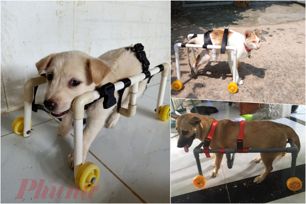 Từ chỗ chế tạo xe lăn cho chó mèo của mình, chị Ngọc nhận được nhiều đơn hàng từ người khác