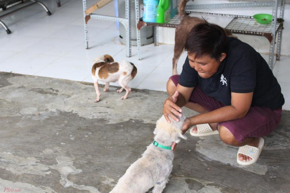 Chị Ngọc nuôi hơn 20 con chó, mèo bị bỏ rơi