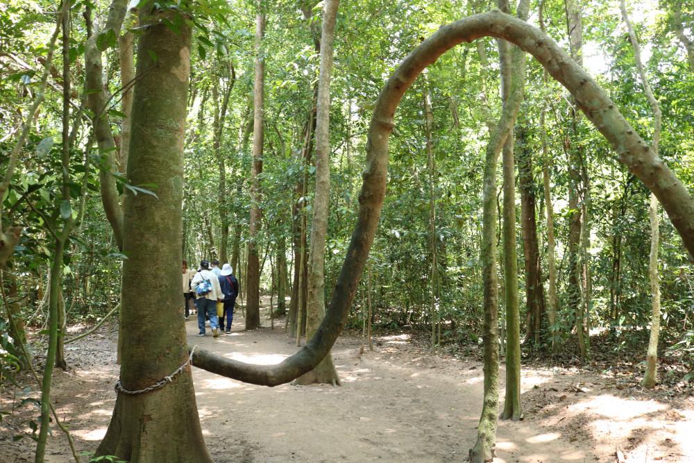 Một dáng cây rừng độc đáo