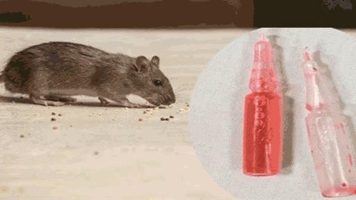 Bé trai ở Lào Cai không may ăn phải gạo rang trộn thuốc diệt chuột, tử vong sau nửa ngày nhập viện.