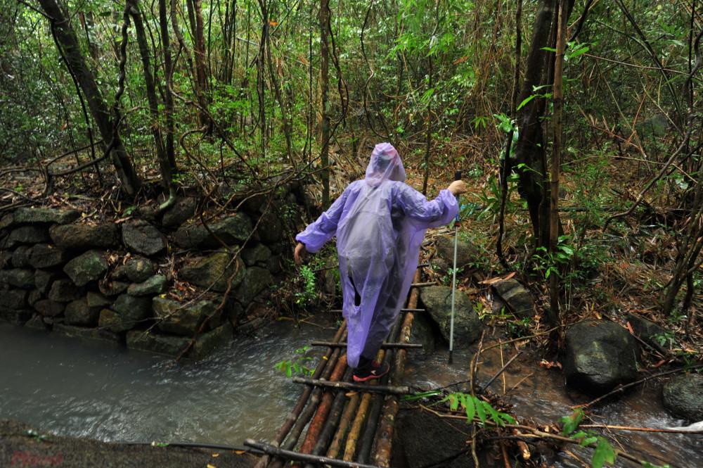 MỘt chiếc cầu nhỏ do người đi rừng bắc ngang suối.