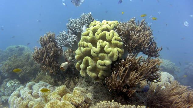Nhiệt độ tăng từ biến đổi khí hậu khiến san hô chết dần và khó hồi phục.