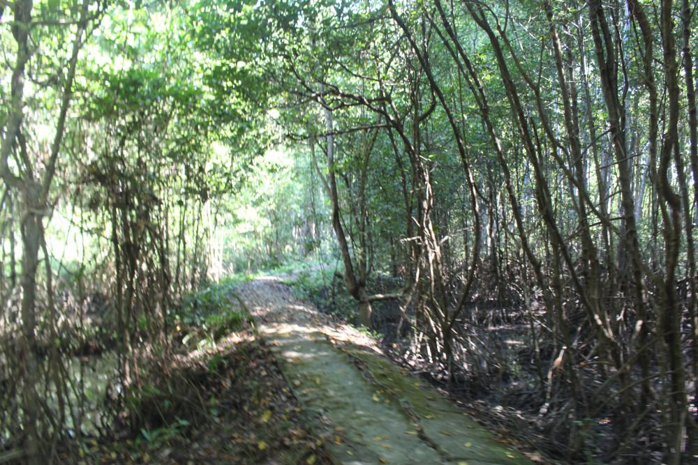 Bên cạnh các bờ biển, Cần Giờ cũng sở hữu những rừng ngập mặn tuyệt đẹp, những hòn đảo kỳ thú như đảo Thiềng Liềng, đảo An Thạnh...