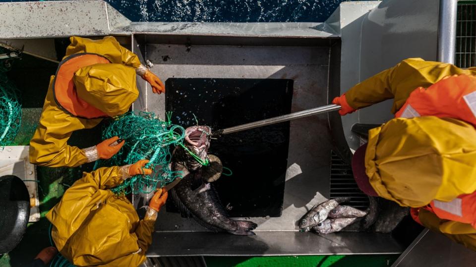 Đánh bắt cá ở Nam Cực tháng 1/2019 - Ảnh: Outlaw Ocean Project