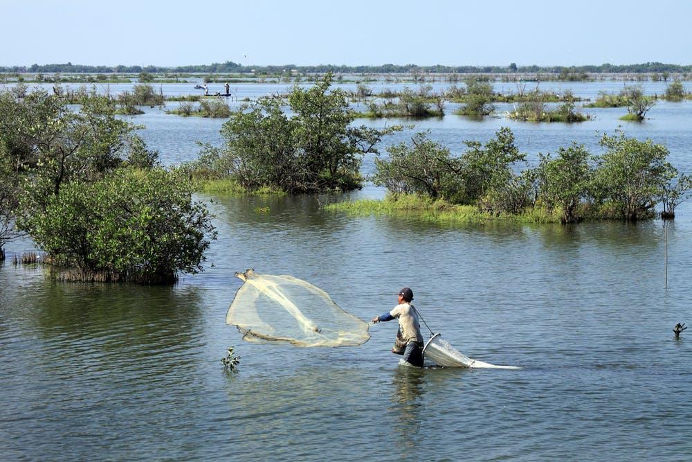 Lượng cá ở các con sông có đập thủy điện phía thượng nguồn của Mexico bị suy giảm nặng nề - Ảnh: Tomas Castelazo/Wikimedia