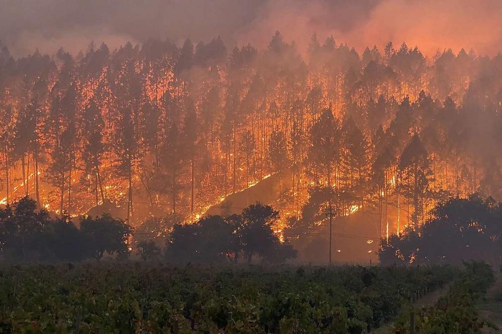 Đám cháy Glass thiêu rụi các cánh đồng trồng nho ở hạt Napa - Ảnh: Cal Fire LNU