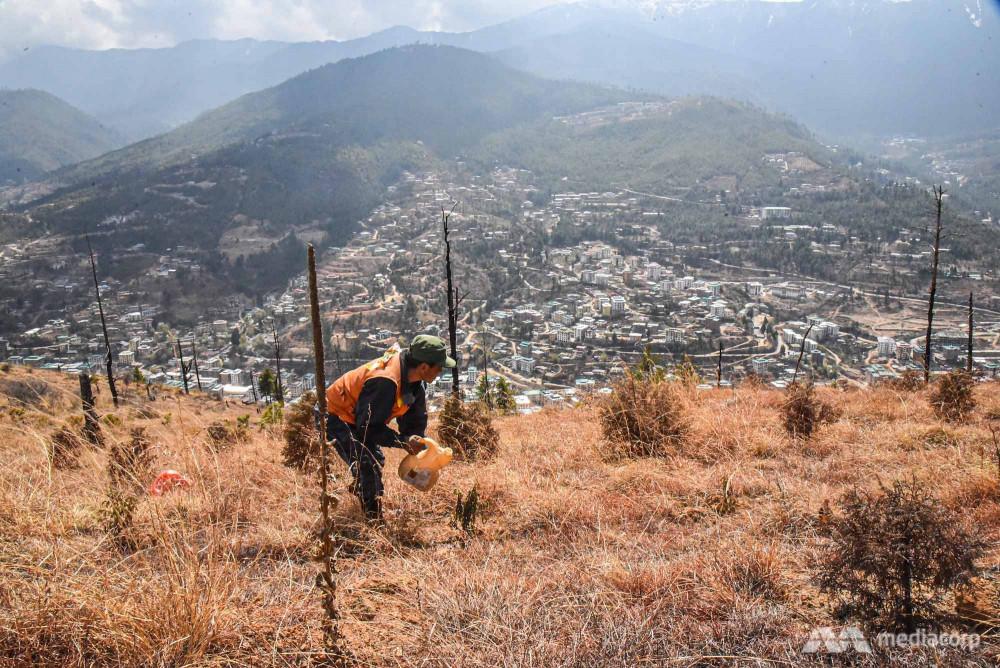 ông Sonam Phuntsho đã trồng hơn 100.000 cây.