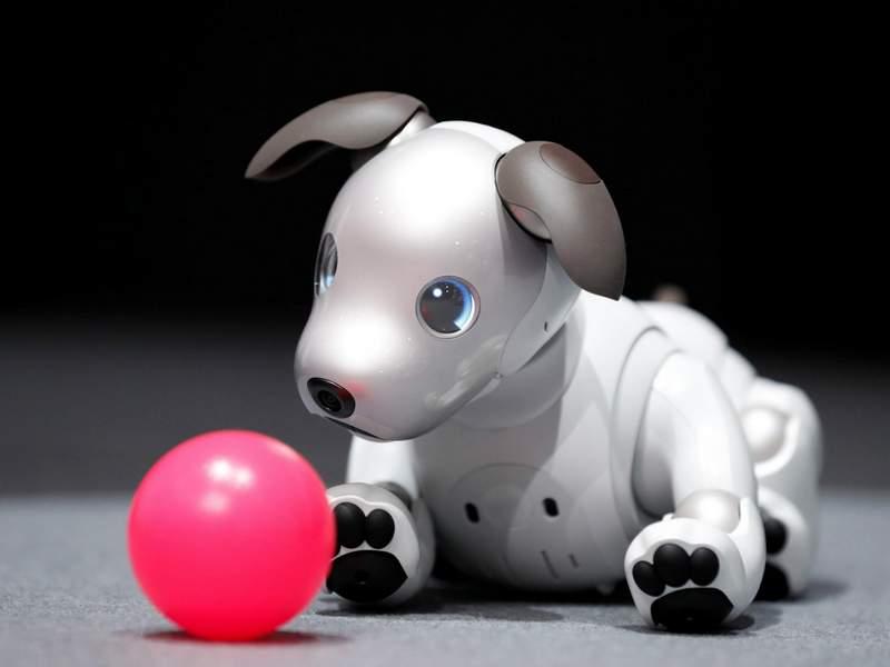 Chó Aibo có các cảm biến giúp thông báo cho người thân ở xa về tình trạng sức khỏe của chủ nhân.