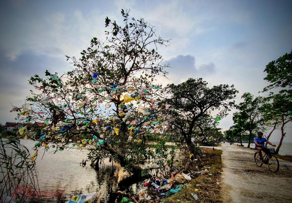 Dấu vết dễ nhận biết nhất của cơn lũ lịch sử, ngoài những ngôi nhà đổ sập là hàng cây cạnh đồng của hai xã Lộc Thủy và An Thủy. Những túi ni-lon, rác thải, vật dụng sinh hoạt của người dân bị dòng nước cuốn đi vướng vào những cây xanh này.