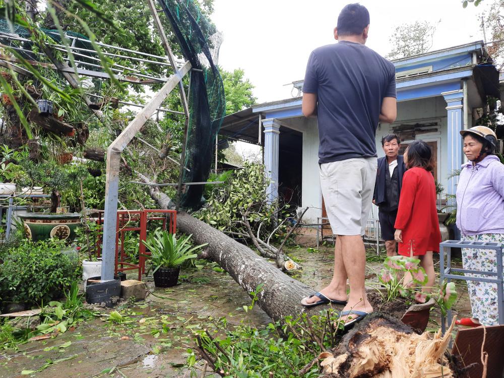 Gió lớn làm cây đổ sập vào nhà người dân ở phường Trường Xuân (TP. Tam Kỳ) khiến phần trước của mái nhà hư hỏng nặng