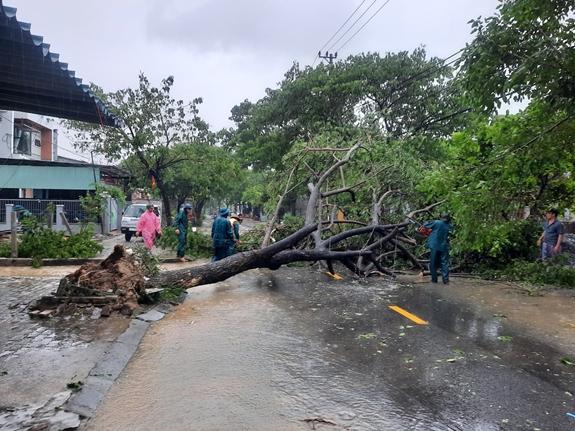 Sau bão, nhiều cây lớn đổ rạp