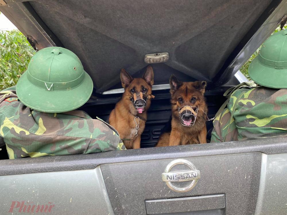3 chú chó nghiệp vụ được điều động lên hiện trường hỗ trợ tìm kiếm