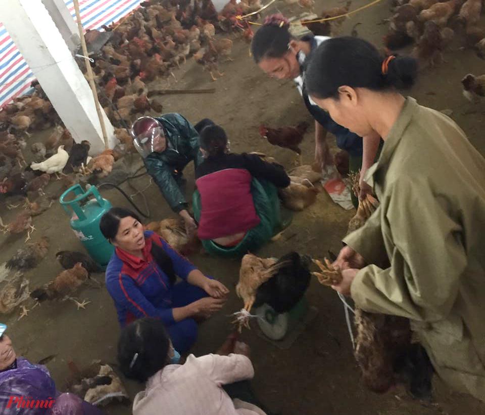 Người dân địa phương mua số gà cứu vớt được ủng hộ anh Điệp