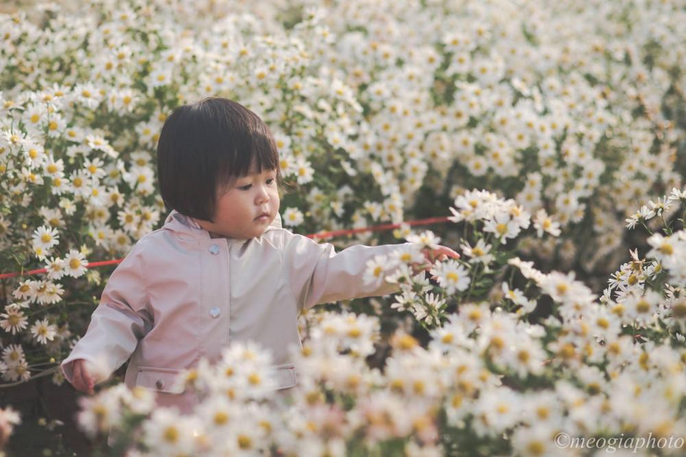 Phượt thủ Thương Trần chia sẻ: Mỗi năm, khi cúc họa mi nở, anh đều đến,  săn ảnh hoa cũng như chụp thật nhiều ảnh cho bạn bè, người thân với loại hoa mộng mơ này.